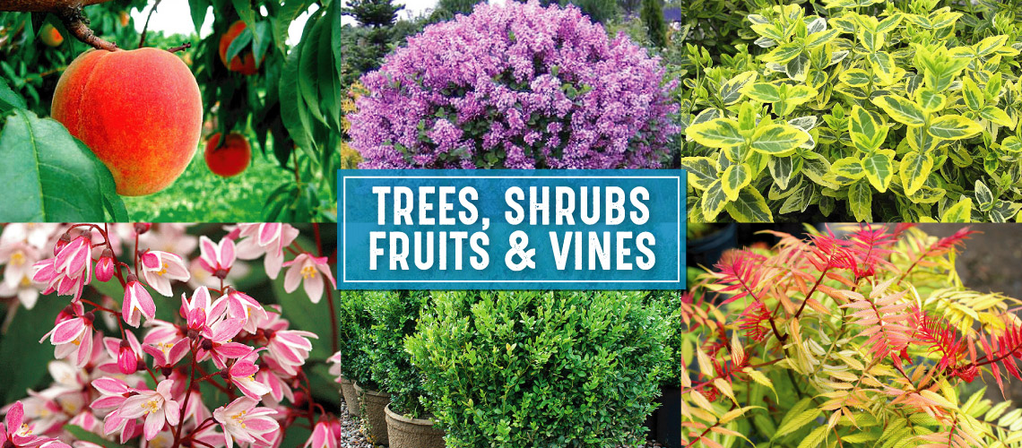 Collage of shrubs and trees.