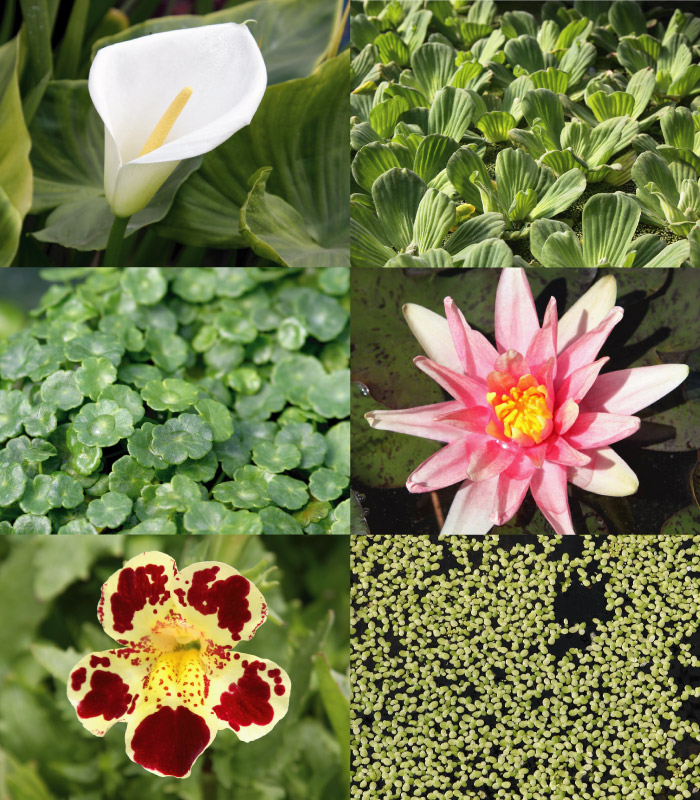 Collage of water plants.