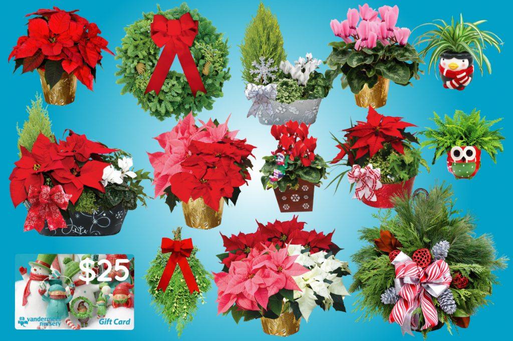 Winter fundraising plants.