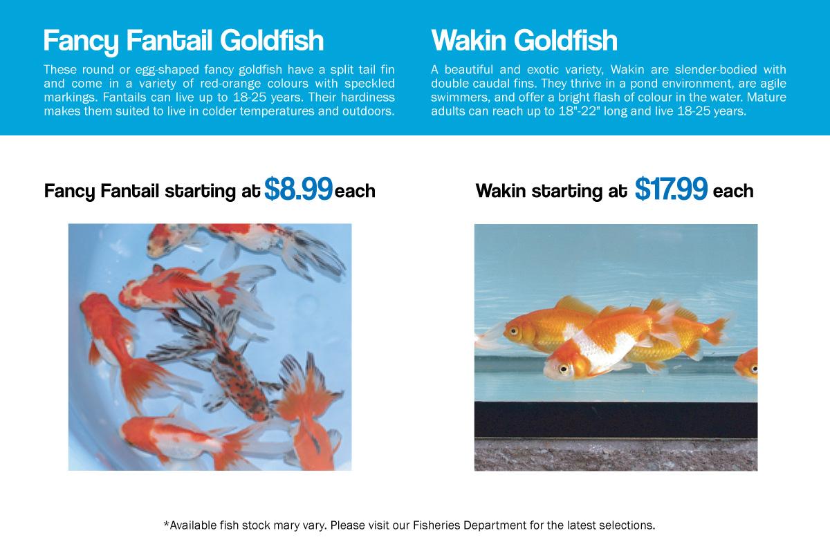 Fisheries – Vandermeer Nursery Ltd