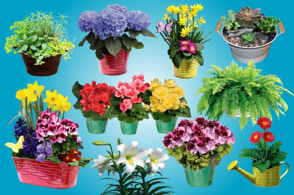 Spring fundraising plants.
