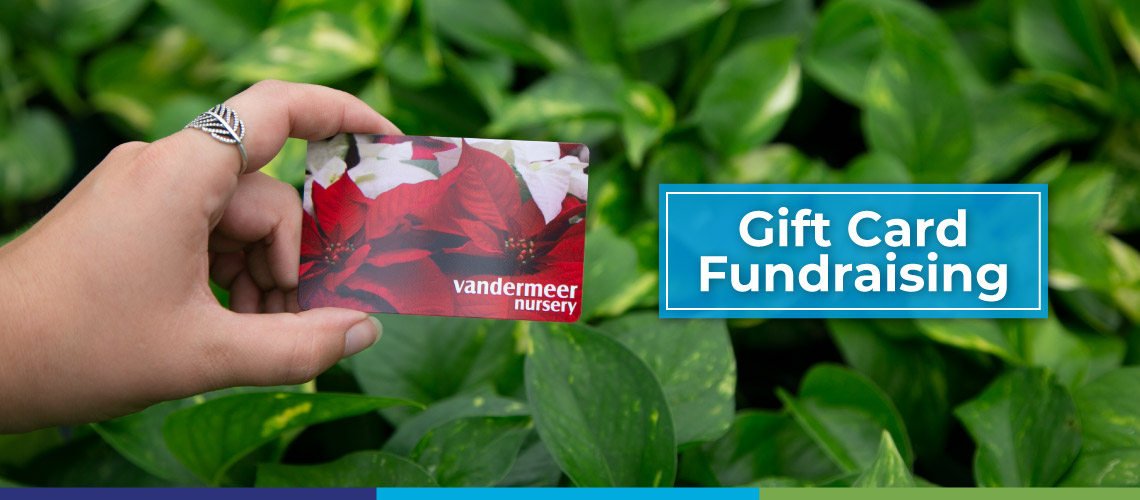 gift card in front of pothos